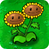 twin-sunflower